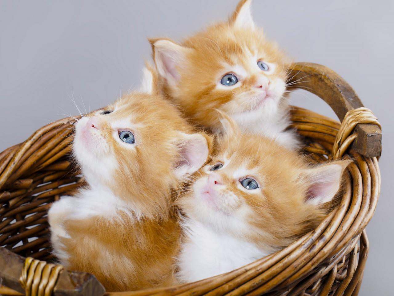 بالصور صور قطط متحركة , صور قطط كيوت 6317 3