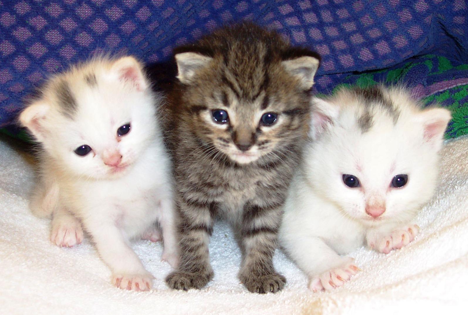بالصور صور قطط متحركة , صور قطط كيوت 6317 4