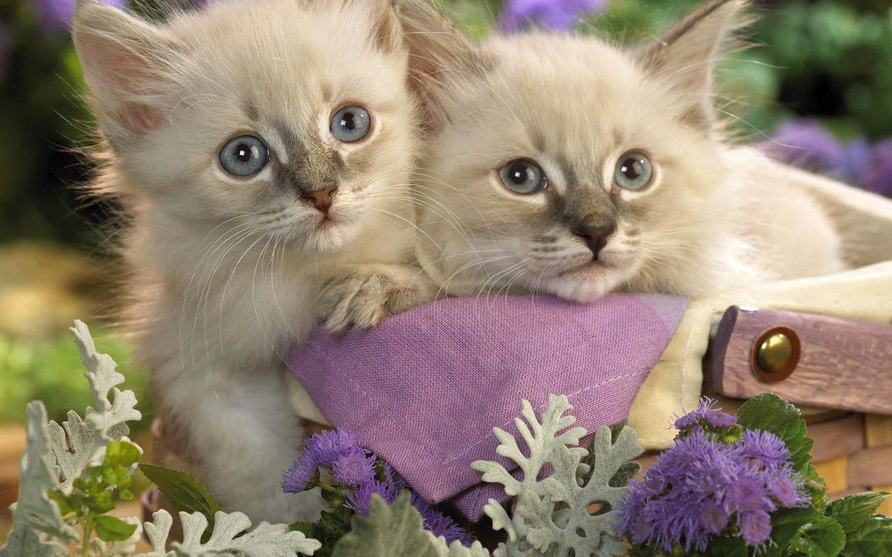 بالصور صور قطط متحركة , صور قطط كيوت 6317 6