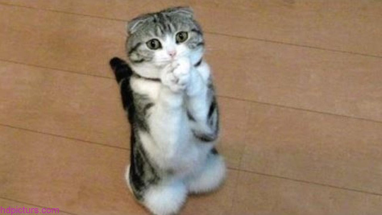 بالصور صور قطط متحركة , صور قطط كيوت 6317 7