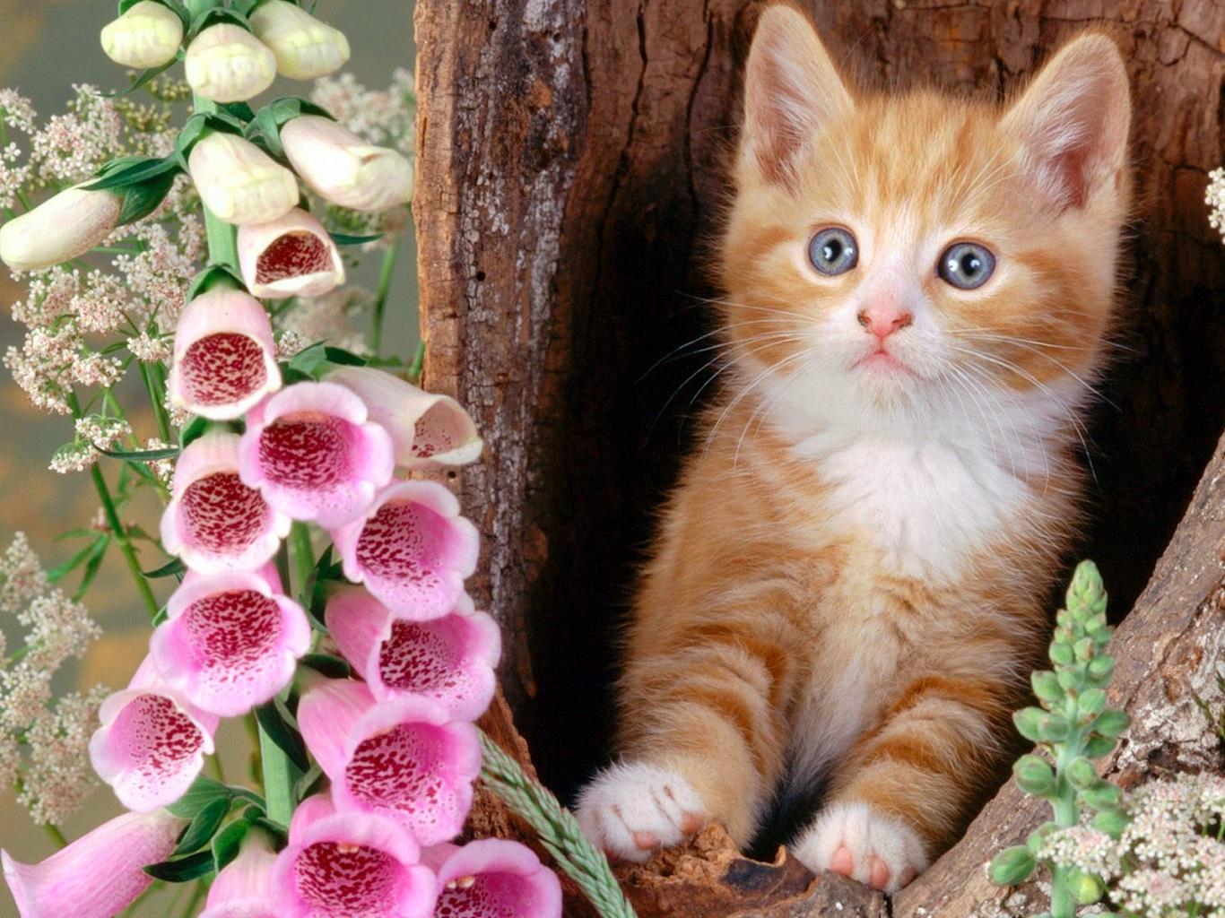 بالصور صور قطط متحركة , صور قطط كيوت 6317 8