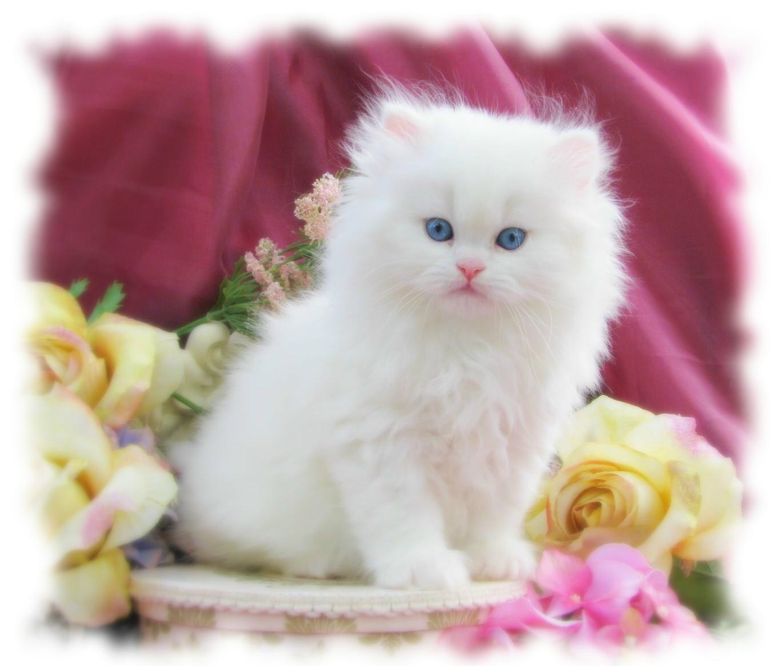 بالصور صور قطط متحركة , صور قطط كيوت 6317