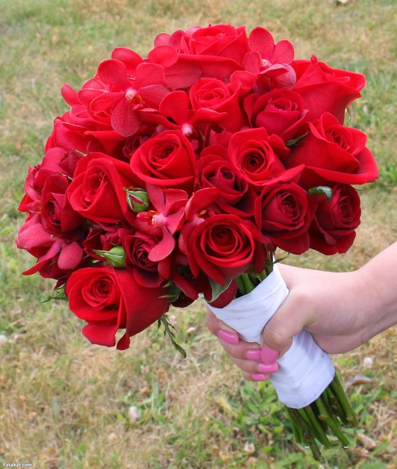 بالصور صور ورود جميلة , اجمل مناظر الورود 66 11