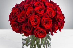 بالصور صور ورود جميلة , اجمل مناظر الورود 66 12 310x205