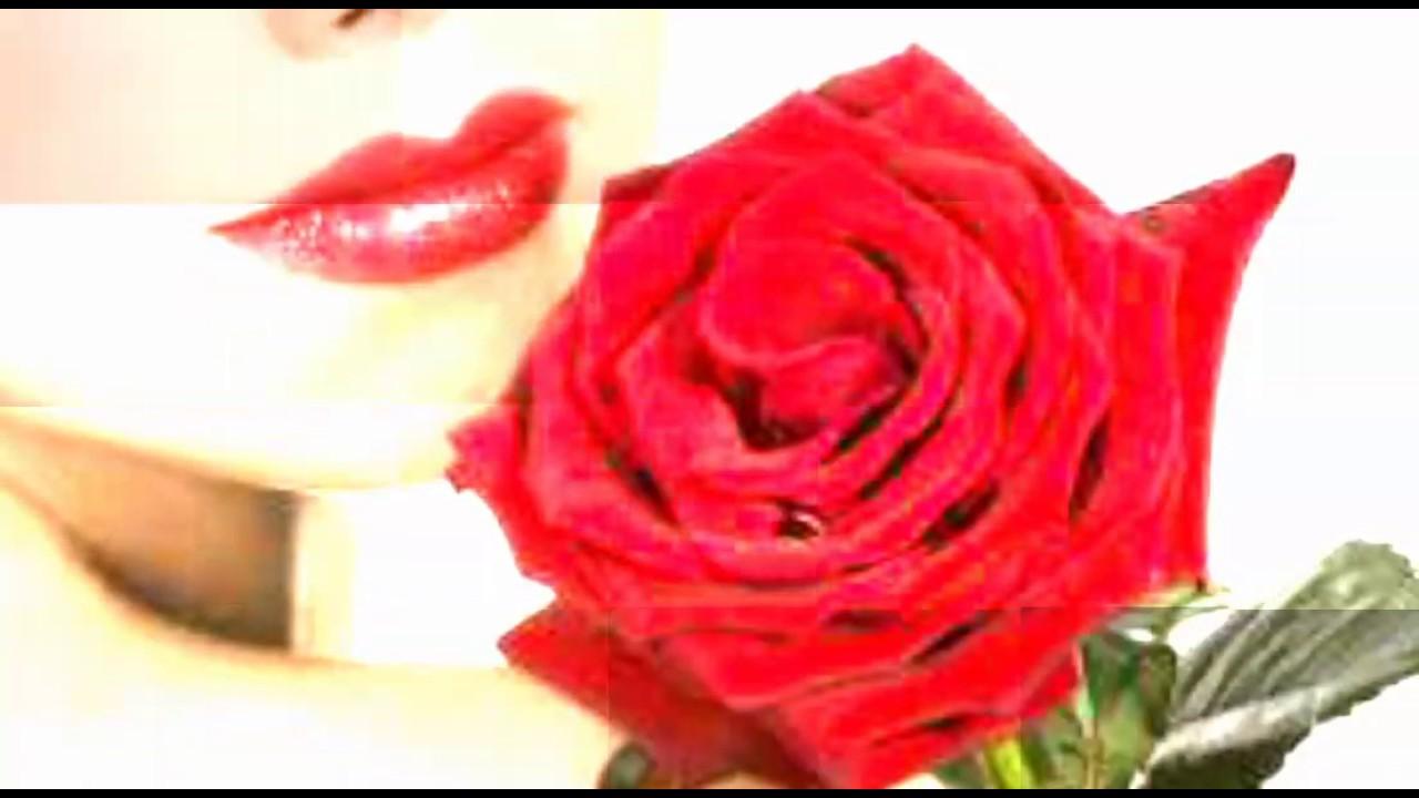 بالصور صور ورود جميلة , اجمل مناظر الورود 66 4