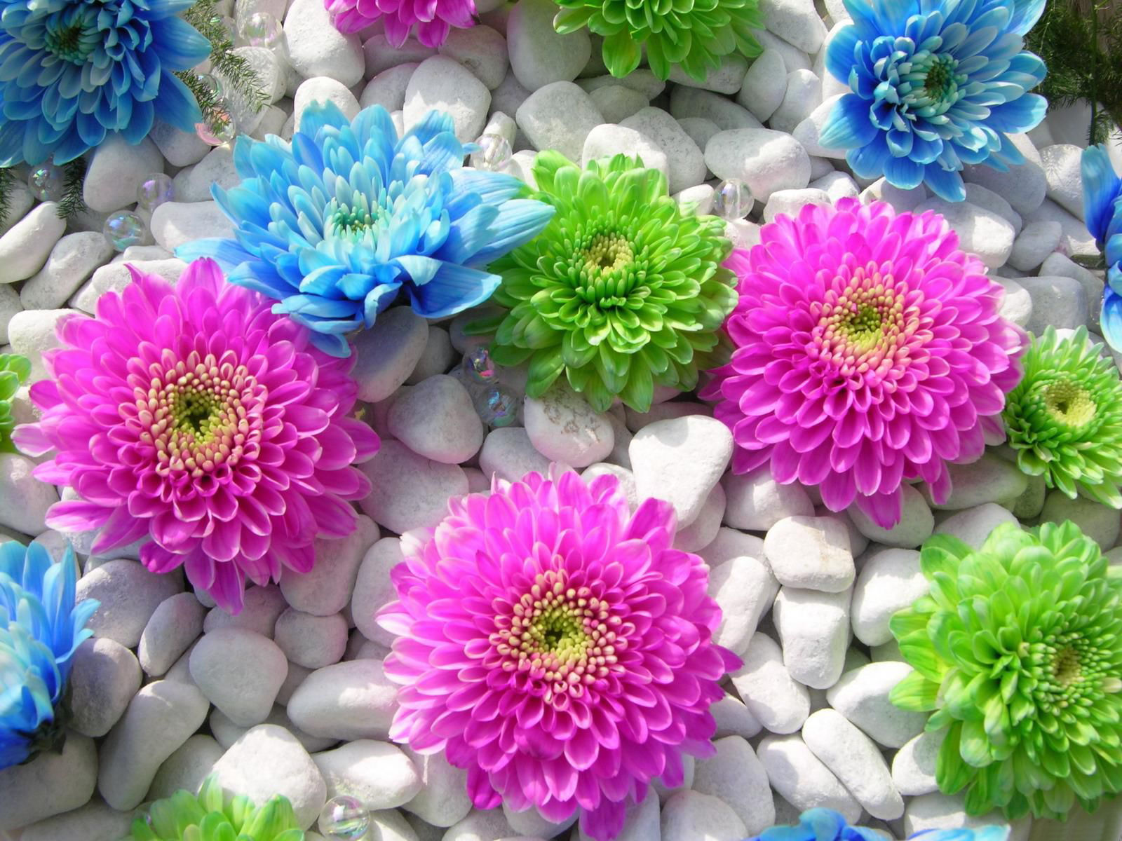بالصور صور ورود جميلة , اجمل مناظر الورود 66 5