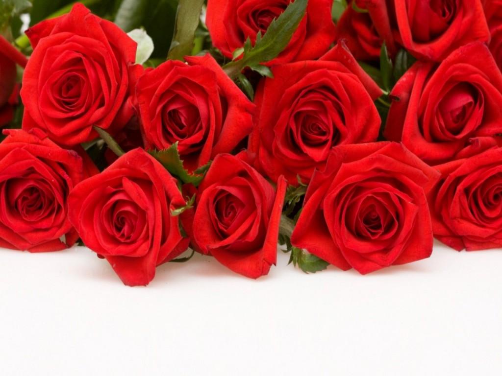 بالصور صور ورود جميلة , اجمل مناظر الورود 66 6