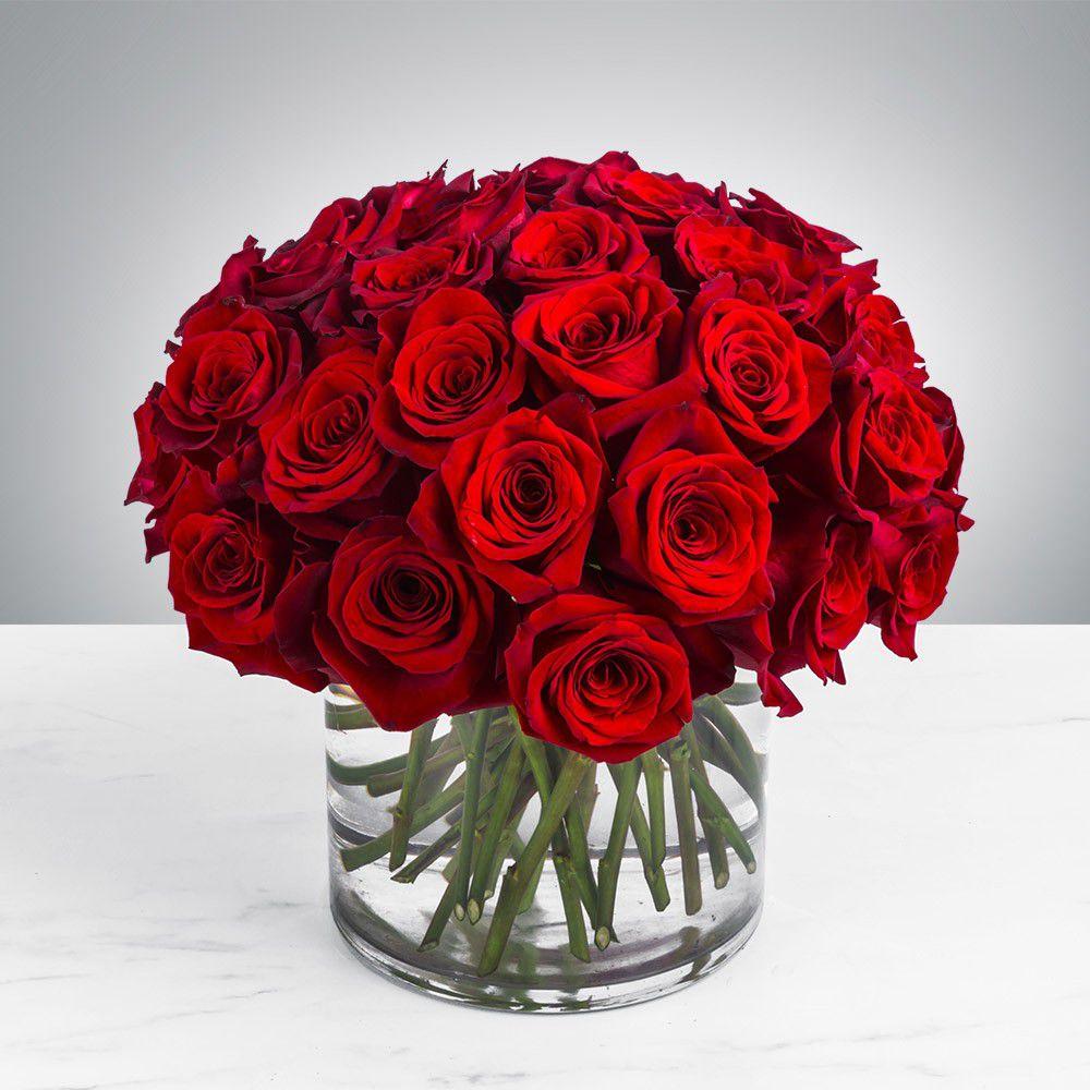 صورة صور ورود جميلة , اجمل مناظر الورود