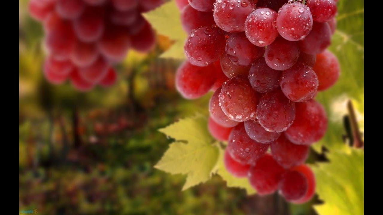 بالصور فوائد العنب الاحمر , تعرف على الفايدة السحرية لتناول العنب الاحمر 4517 2