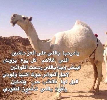 بالصور شعر بيتين مدح , اجمل اشعار مدح 11090 2