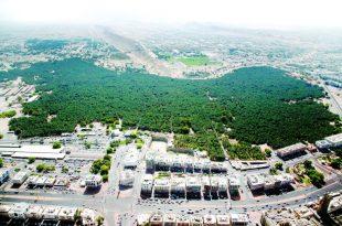 بالصور اين تقع مدينة العين , مدينة العين بين الماضي والحاضر 9649 7 310x205