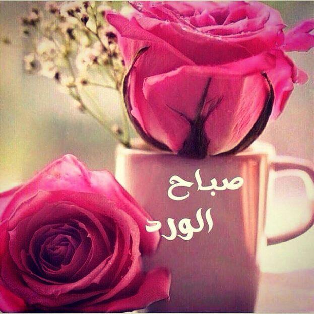 صورة ورد صباح الخير , كثير منا مانحتاج الي هذه الورود الجميلة