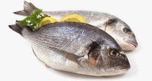صور فوائد الاسماك للانسان , السمك وفوائده العديد للجسم