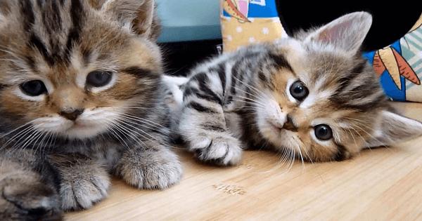 صور تفسير حلم قطط كثيرة , القطط في المنام