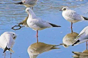 صور بحث عن الطيور وانواعها , معلومات عن الطيور