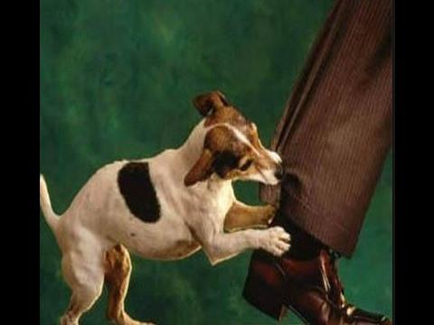 صور تفسير حلم عضة الكلب , الكلب في المنام