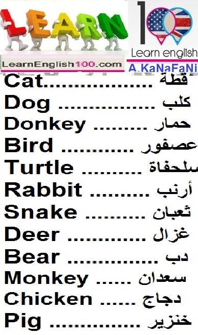 صورة كلمة بالانجليزي ومعناها بالعربي , كلمات وترجمتها بالصور