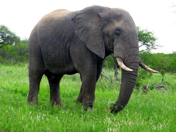 صورة رؤية فيل في المنام , تفسير رؤية الفيل في الحلم