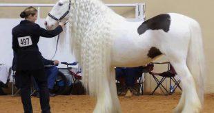 صور صور حصان جميل , صور خيول حلوة
