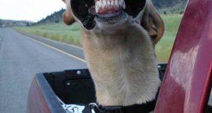 صور صور كلاب مضحكه , حركات كوميدية للكلاب