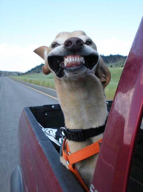 صورة صور كلاب مضحكه , حركات كوميدية للكلاب
