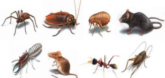 صور انواع الحشرات المنزلية الطائرة , شرح تفصيلي عن الحشرات