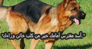 صور امثال عن الحيوانات , امثال عربية ذكر فيها اسماء حيوانات