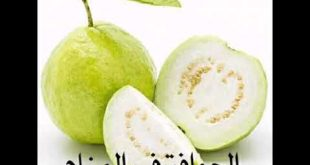 صورة اكل الجوافة في الحلم , تفسير حلم اكل الجوافة في المنام