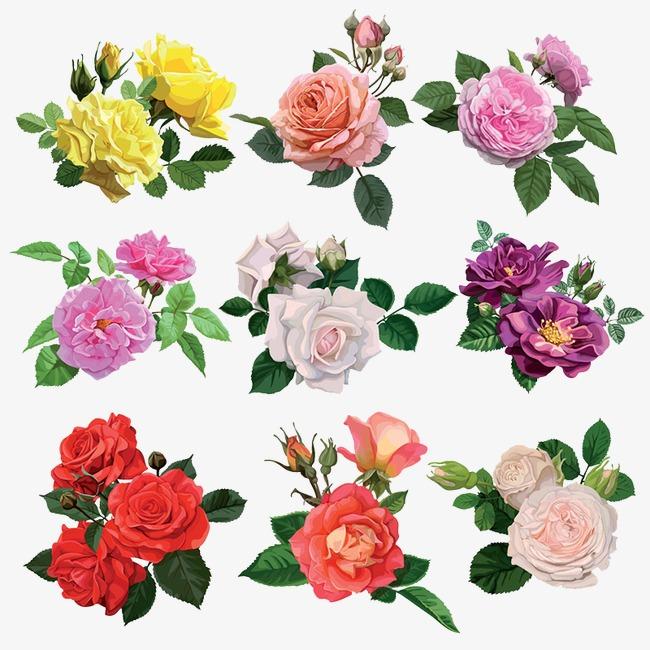 صورة انواع الورود بالصور , صور لاجمل وارق ورود العالم