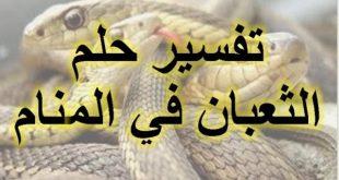 صورة تفسير حلم الثعابين الصغيرة , تفسير رؤية الثعابين الصغيرة في المنام