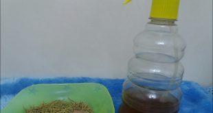 صور اعشاب هندية لتطويل الشعر , وصفة سريعة لتطويل الشعر بالاعشاب
