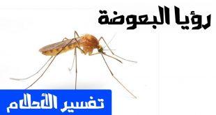 صور البعوض في المنام , تفسير حلم رؤية البعوض