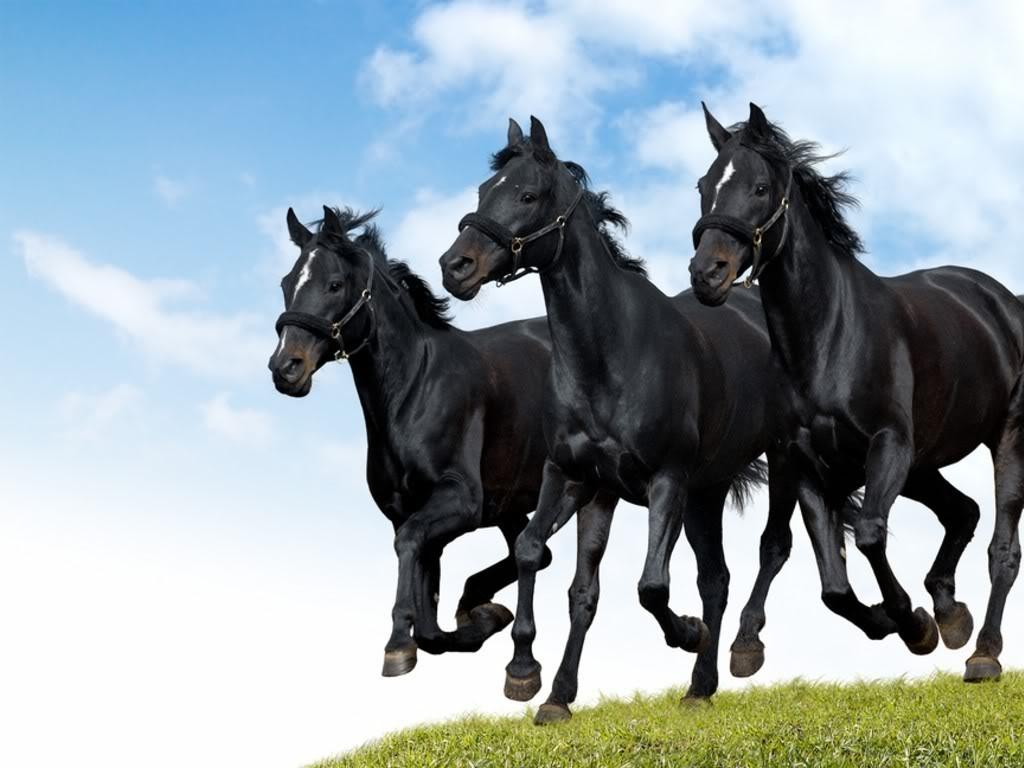 صورة اجمل صور خيول , شاهد جمال الخيول وخفتها
