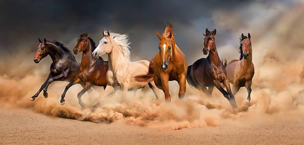 صور اجمل صور خيول , شاهد جمال الخيول وخفتها