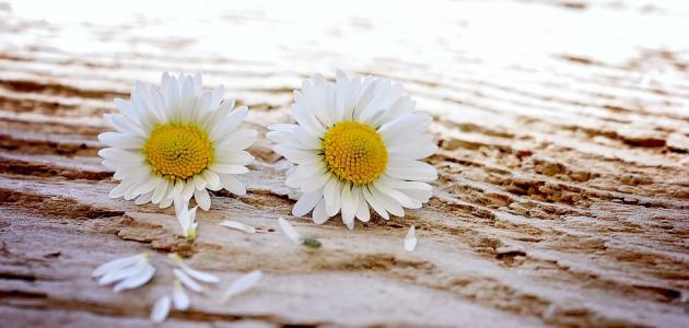 صور اجمل ماقيل عن الوفاء , عبارات جميلة عن الوفاء
