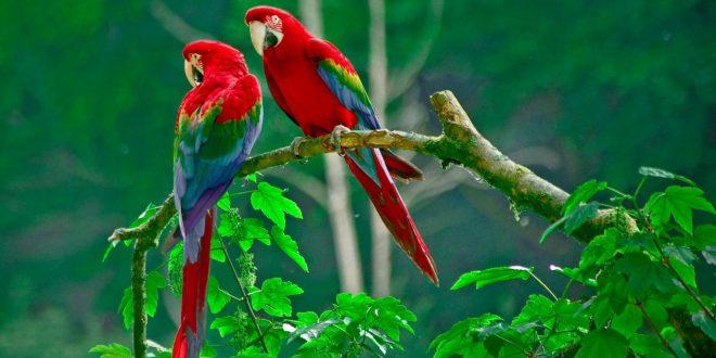 صورة اجمل طيور العالم , تعرف على اشكال و انواع الطيور
