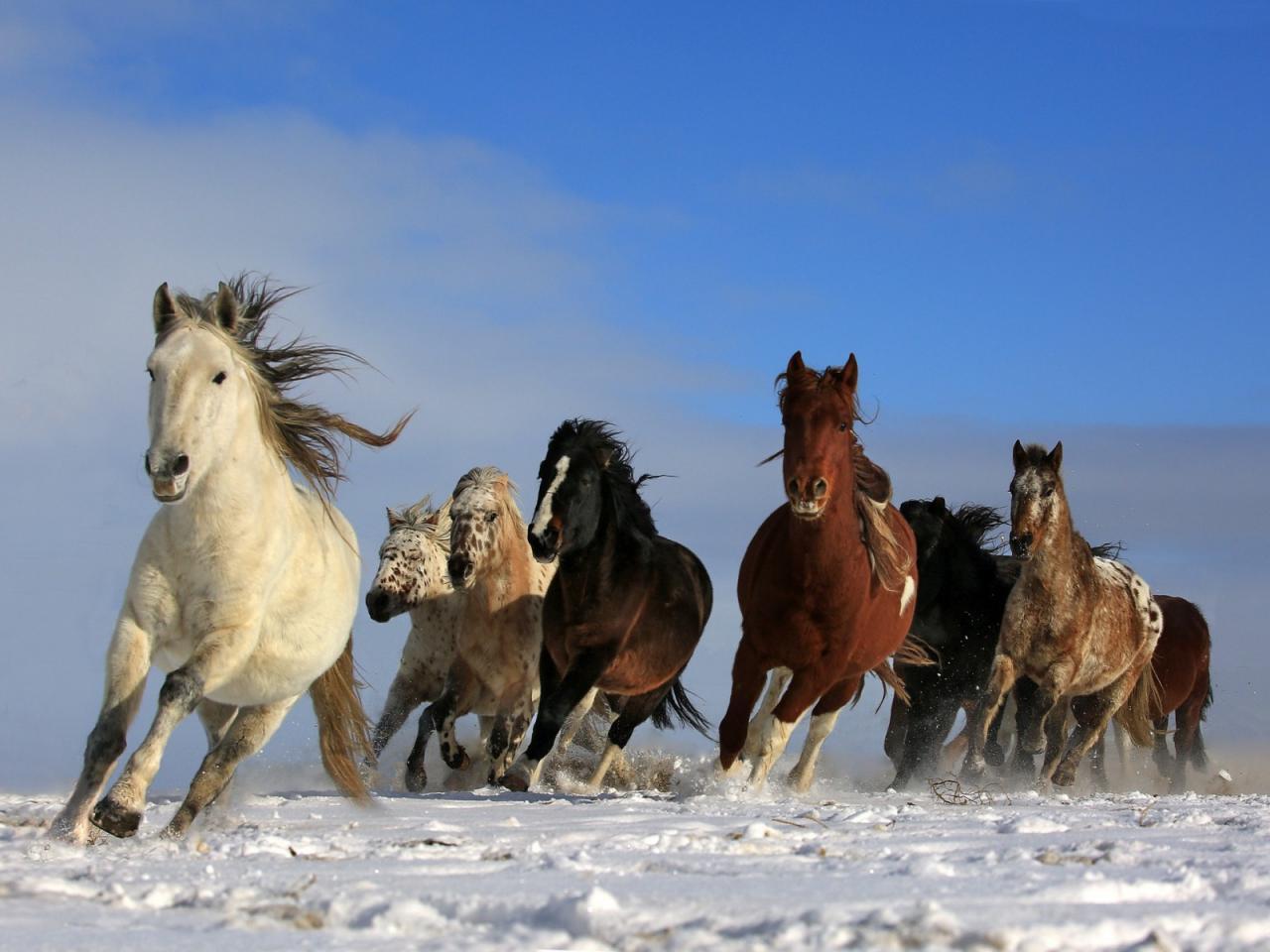 صورة اجمل خيول في العالم , شاهد خفة و جمال الخيل