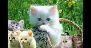 صورة حيوانات اليفة , حيوانات جميلة تؤنسك فى بيتك