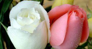 صورة زهور جميلة , مجموعة من الزهور تزيل الاكتئاب
