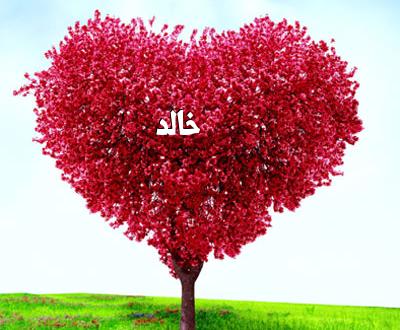 صورة صور اسم خالد , اجمل الاشكال والتصميمات المختلفة لاسم خالد