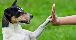 صورة كيفية تدريب الكلاب , طرق هامة ومميزة بالصور لتقوم بتدريب الكلب بسهولة