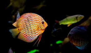 صورة معلومات عن الاسماك ,اتعرف علي موصفات السمك المتنوعه