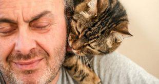صورة حاجات لازم تعرفها لو عندك قطة , كيفية تربية القطط