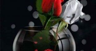 صور مساء الورد
